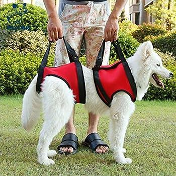 Caractéristiques: Aide les animaux souffrant d'arthrite, de dysplasie de la hanche, de traumatisme de la colonne vertébrale et de fatigue générale. Idéal pour les chiens qui se rétablissent d'une blessure au genou, à la hanche ou au dos ou pour une r...