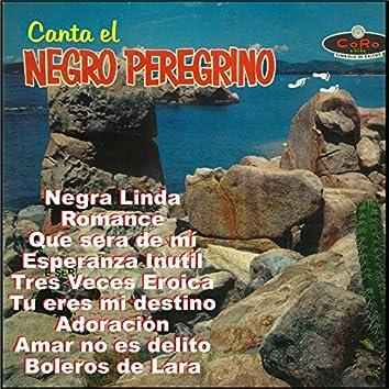 Canta el Negrito Peregrino