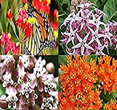 Big Pack - (7,000+) Milkweed Butterfly Weed Mix - Flower Seeds By MySeeds.Co (Big Pack - Milkweed Mix)