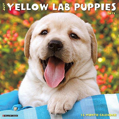 Just Yellow Lab Puppies 2017 Wall Calendar (Dog Breed Calendars)