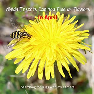 Which Insects Can You Find on Flowers in April: Searching for Bugs with my Camera