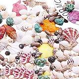 JWShang 130 conchas de mar mixtas naturales, conchas de mar de playa, pequeñas caracolas para rellenar jarrón de peces, decoración del hogar, decoración de bodas y acuarios