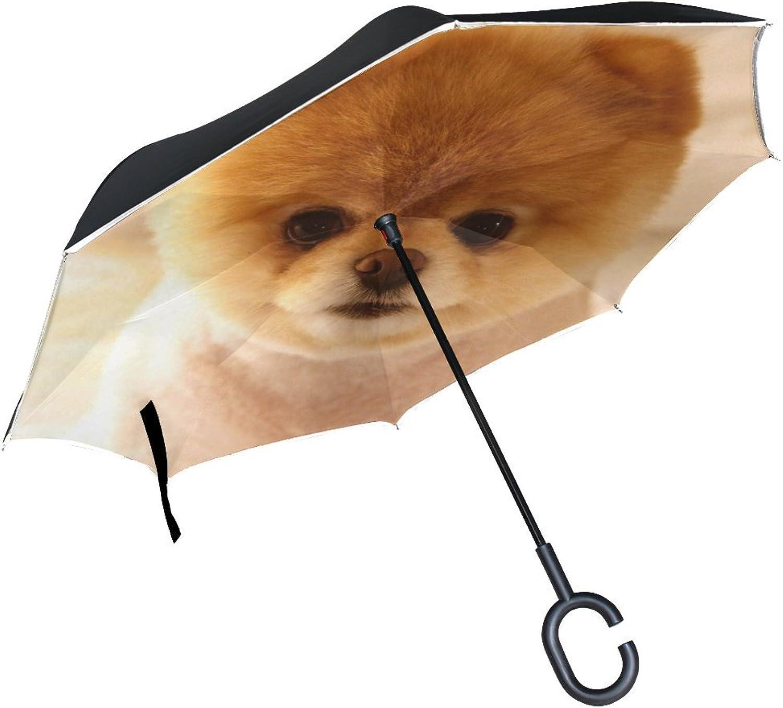 Animal Dog Pomeranian Yellow Pet Small Fluffy Puppy Adorable Ingreened Umbrella Large Double Layer Outdoor Rain Sun Car Reversible Umbrella
