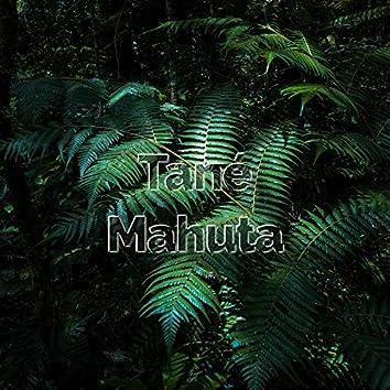 Tané Mahuta