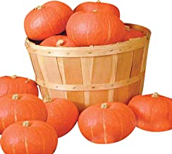 Winter Kabocha Squash Sunshine F1 - Vegetable Seeds Package - 1 oz. Package
