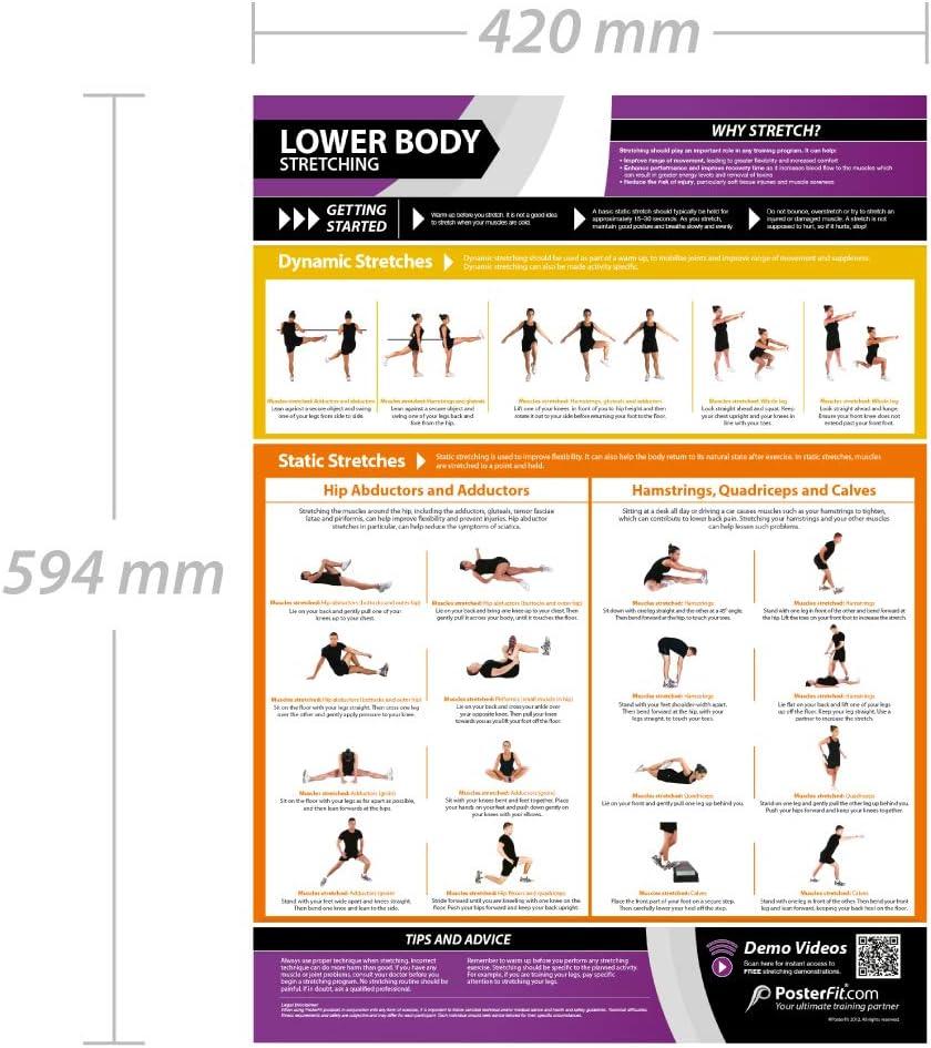 Estiramiento de la parte inferior del cuerpo | Estiramientos dinámicos y estáticos | Póster laminado para el hogar y el gimnasio | Soporte gratuito ...