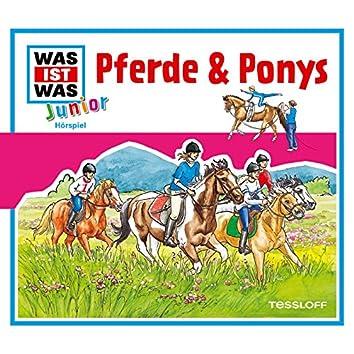 02: Pferde & Ponys