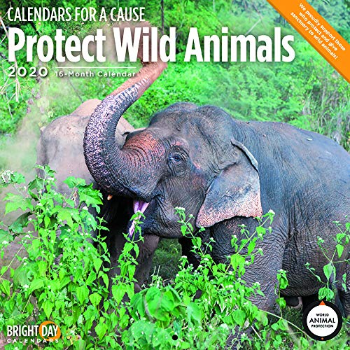 2020 Protect Wild Animals Wall Calendar by Bright Day, 16 Month 12 x 12 Inch, Endangered Elephant Lion for a Cause