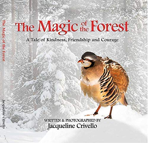 The Magic Of The Forest