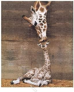 EuroGraphics Giraffe, Mother Love, First Kiss by Ron D'Raine. Photo Print Poster 24x36