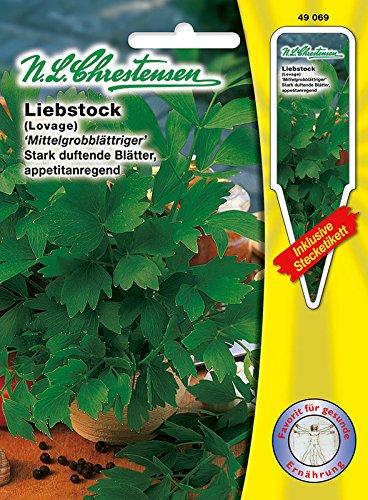 Liebstock 'Mittelgrobblättriger' -Maggikraut- stark duftendende Blätter, appetitanregend ( mit Stecketiketten)