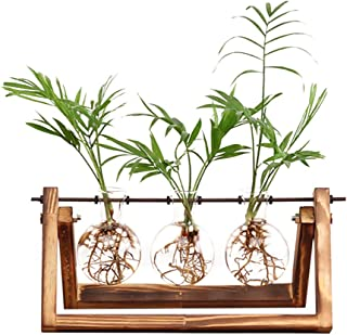Ivolador Desktop Glass Planter Bulb Vase Bulb Plant Terrarium with Retro Solid Wooden..