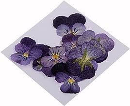 pressed violets