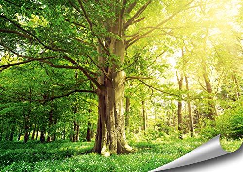 ARTBAY Wald Poster XXL - 118,8 x 84 cm   Alte Buche   Blumenwiese  Baum  Bäume  Sonniger Wald   Natur Bilder  Premium Qualität