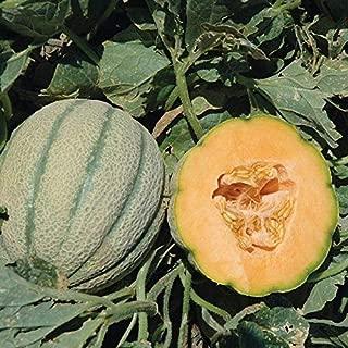 Orange Sherbet PMT F1 Hybrid Melon Seeds - bright orange and very aromatic.!!(25 - Seeds)