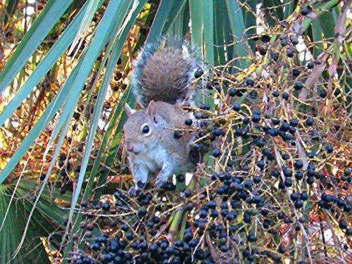 Squirrel's Natural Health Food