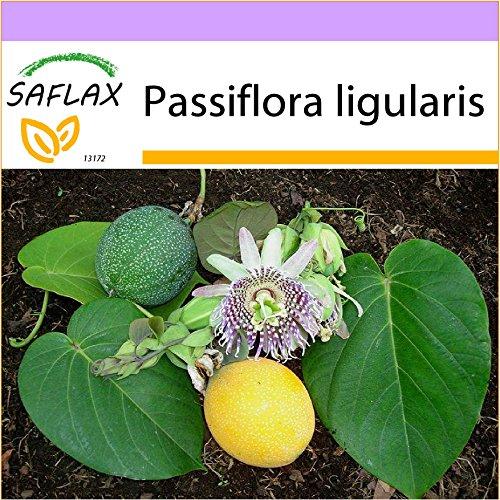 SAFLAX - Süße Granadilla - 20 Samen - Passiflora ligularis