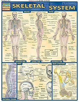 Skeletal System  Quick Study Academic