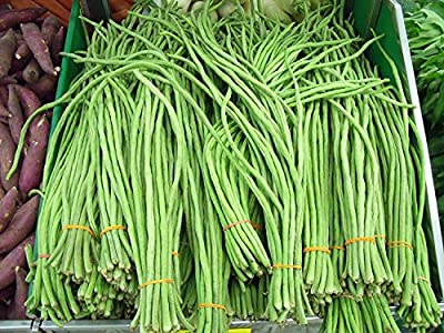 Stonysoil Seed Company Asian Heirloom Yard Long Bean Seeds Red Seeded Variety Sweet Tender and Delicious