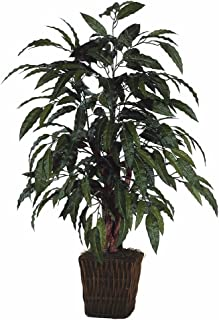 mango tree in container