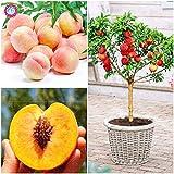 Semillas:  Durazno Bonsai comer una deliciosa y jugosa fruta