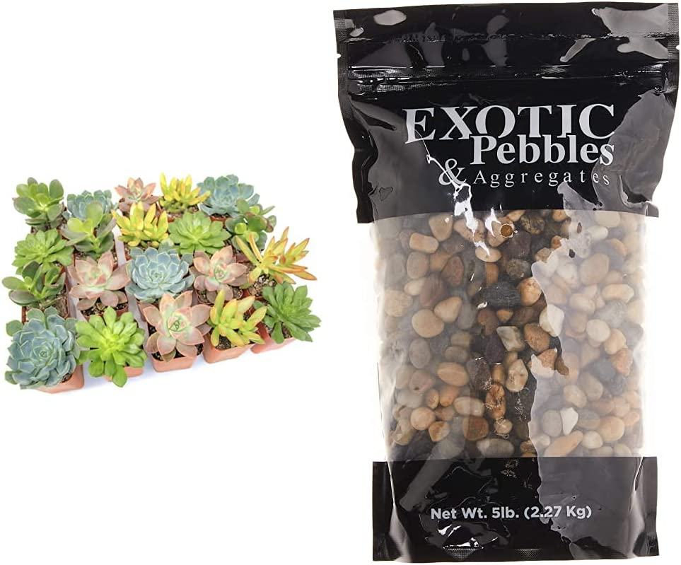 Altman Plants Live Max 66% OFF Succulent 20 Pack S Assorted Soldering Potted