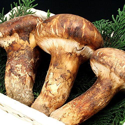 Amazon | まつたけ 松茸 マツタケ 中国産松茸 約200g 市場直送(gn) | オーガニックサイバーストア | 松茸 通販