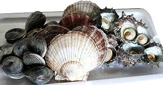 海鮮 バーベキューセット 中 築地直送 3種類2.5kg(ホンビノス1kg・サザエ1kg・ホタテ5枚)バーベーキュー【BBQ中セット】