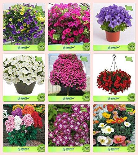 Pinkdose® Blumensamen: Pflanzensamen für die Grenze kombiniert Petunie, Petunie-Rose, Petunie-Blau, Petunie-Schneeball, Petunie-Stern, Petunie-Scharlachrot, Phl