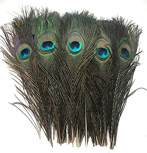 American Feathers Peacock Eye Feathers (Natural 10-12', per 100)
