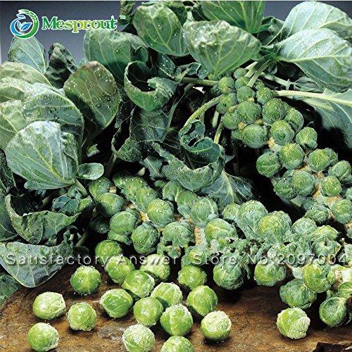 Chinois Graines Little Baby Chou, Golden Chou, Nutritif et délicieux semences de légumes faciles à cultiver 100 particules / lot