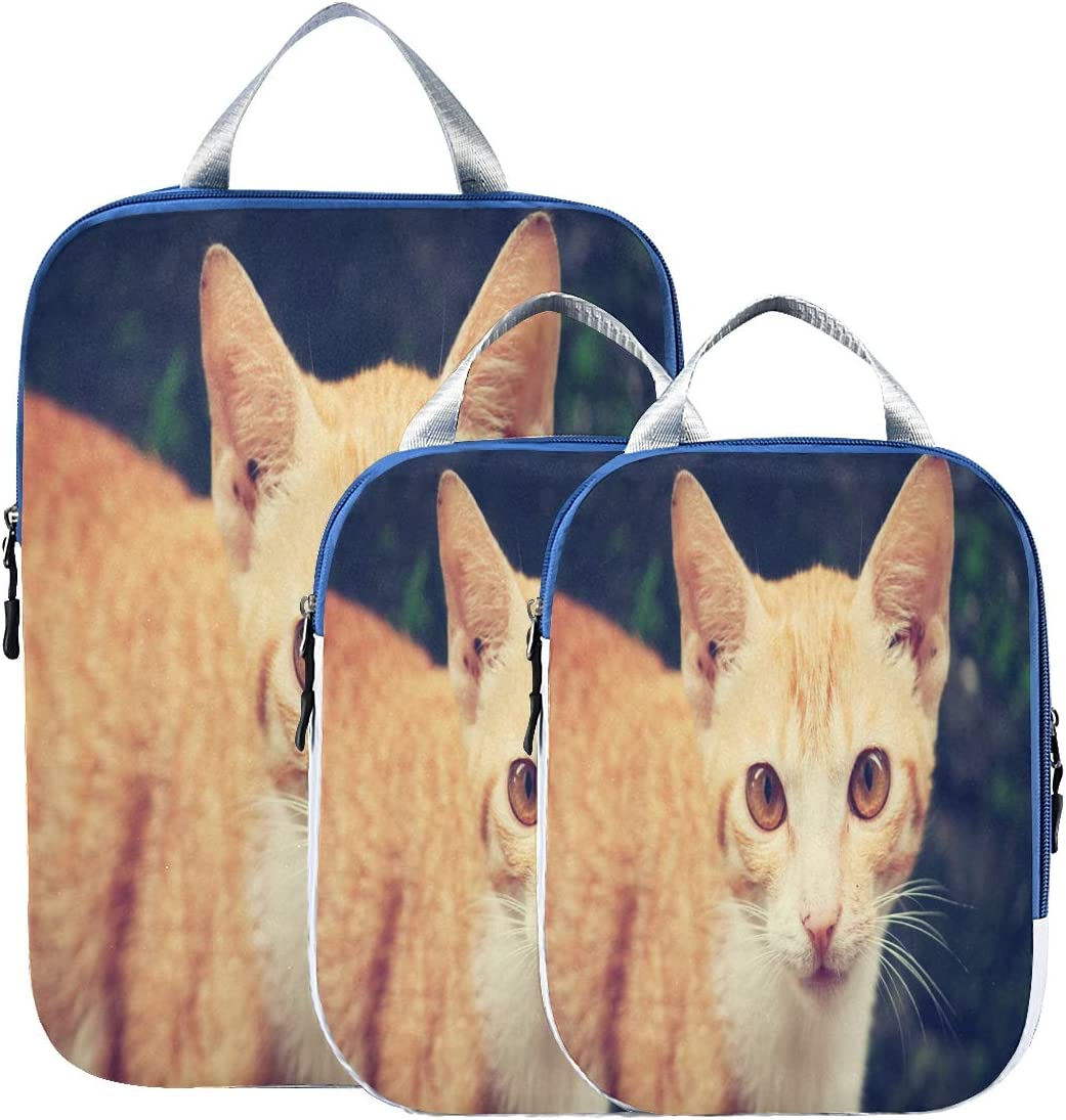 Suitcase Organizer Bags Mail order Set Beautiful Special Campaign Pac Cat Funny Luggage Cute