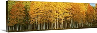 Aspen Trees in Autumn, Last Dollar Road, Telluride, Colorado Canvas Wall Art Print, 60
