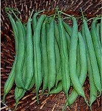 50 Bean Bush Strike Garden Seeds #DS03