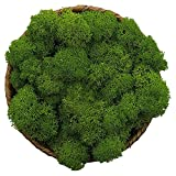 Moss Preserved, Green Moss for Fairy Gardens, Terrariums, Any Craft or Floral Project or Wedding Other Arts (Green, 3OZ)