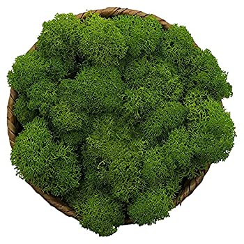 Moss Preserved Green Moss for Fairy Gardens Terrariums Any Craft or Floral Project or Wedding Other Arts  Green 3OZ