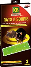 Amazon.es: pegamento ratas