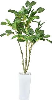 DORIS 観葉植物 光触媒 本物に近い質感 水やり不要 フェイクグリーン 陶器鉢 コーヒーツリー