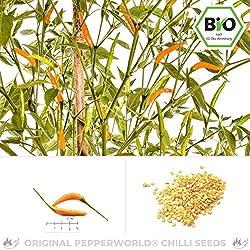 Pepperworld Thai Orange Hot Bio Chili-Saatgut, 10 Korn, Chili-Schote zum Anpflanzen, mittel-scharf