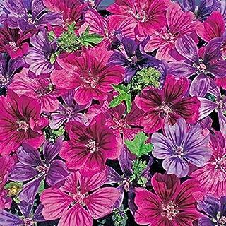 10 Pack of 25 Flower Seeds Mystic Merlin Zebra Hollyhock Seeds