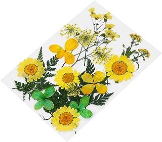 Artibetter 1 Ensemble de Fleurs Pressées Séchées Mélangées de Fleurs Séchées pour Lartisanat Bricolage Résine Bijoux Fabri...