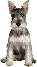 "Paper House Productions 3.75"" x 2"" Die-Cut Miniature Schnauzer Dog Shaped Magnet for Refrigerators and Lockers"