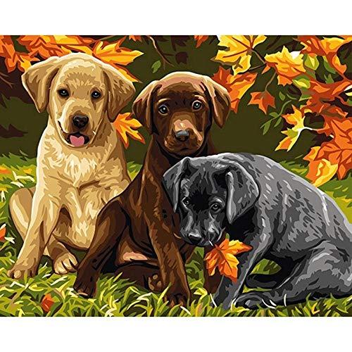 JJDDZLB Pintura por Números para Adultos y Niños,Tres Perros Animales,para Pintar con Números Kit,DIY Pintura al Óleo por Números Decoración del Hogar, Sin Marco,40x50cm
