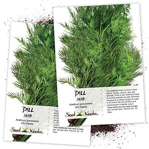 Seed Needs, Dill Culinary Herb (Anethum graveolens) Twin Pack of 250 Seeds Each...