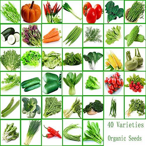 40 Packungen Gemüsesamen 22000 Stück Sorten Bio-Frischpflanzen mit höchster Qualität Samen zum Pflanzen im Garten Outdoor Yard Köstliche Suppe