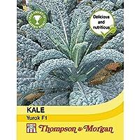 【輸入種子】 Thompson & Morgan KALE Yurok F1 ケール ユロク F1 トンプソン&モーガン