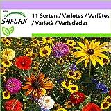 SAFLAX - Divertimento per i bambini - 1000 semi - 11 Sorten