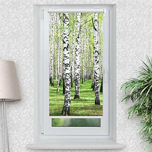 La-Melle » Rollo Motiv Birkenwald | Verschiedene Größen | Klemmrollo ohne Bohren | auch für Wand- oder Deckenbefestigung, Größe: B 80 x H 150 cm