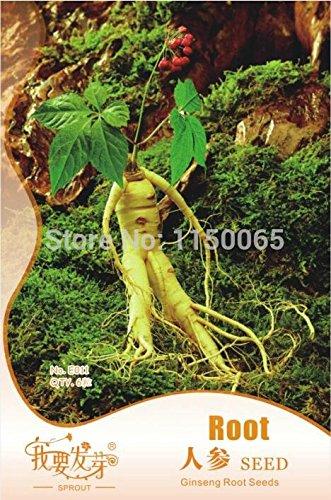 200pcs Heirloom / lot Thai Sun Hot Pepper Capsicum Annuum ornemental Chili Graines Bonsai Usine Mini Hot Pepper Seeds Graines asiatiques