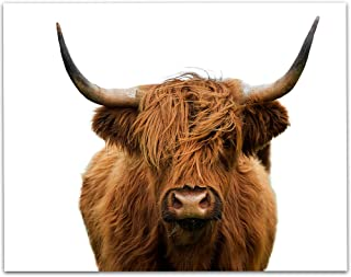 LSA Brand Highlands Cow Colored - 11x14 Unframed Print - Makes a Great Farm Decor Under $15
